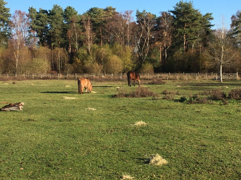 Feeding hay in multiple piles prevents conflict and encourages movement